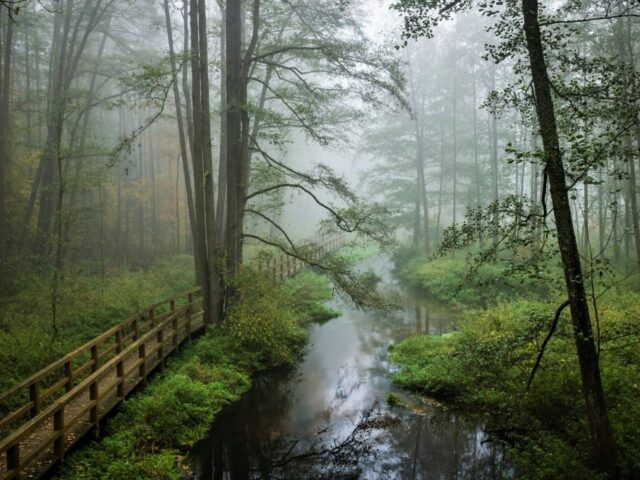 KOZIENICE LANDSCAPE PARK THE ROYAL SPRINGS AND SECRETS OF KOZIENICE FOREST